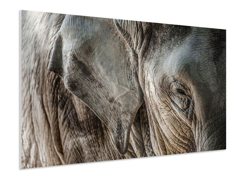 Hartschaumbild Close Up Elefant