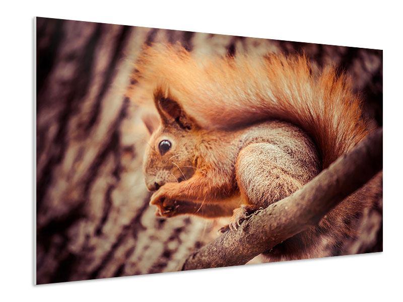 Hartschaumbild Eichhörnchen