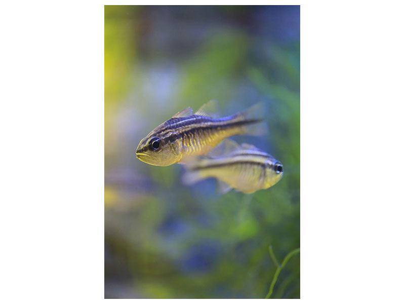 Hartschaumbild Fischpaar