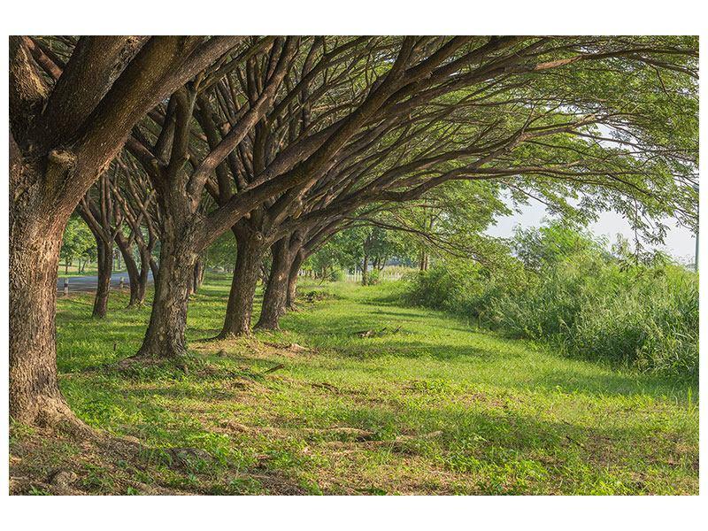 Hartschaumbild Alter Baumbestand