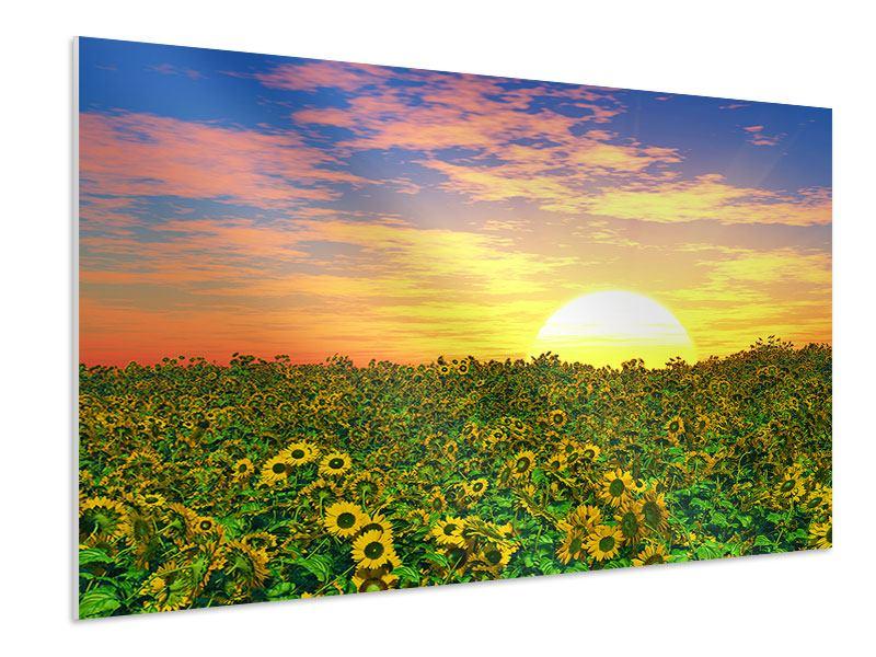 Hartschaumbild Blumenpanorama bei Sonnenuntergang