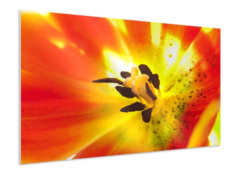 Hartschaumbild Die Narbe einer Tulpe XXL