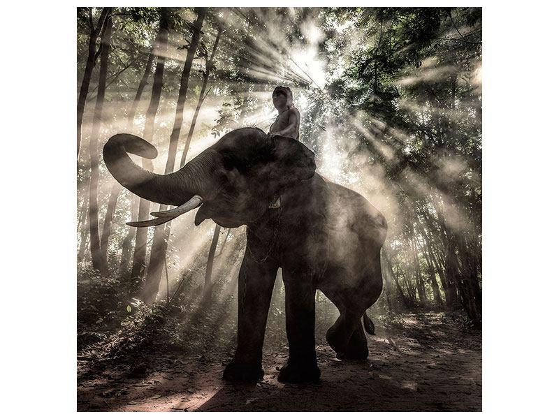 Hartschaumbild Der Elefant