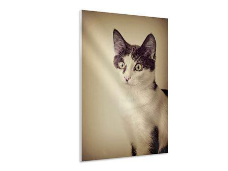 Hartschaumbild Katze
