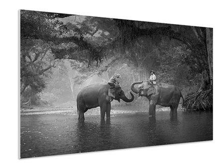 Hartschaumbild Zwei Elefanten