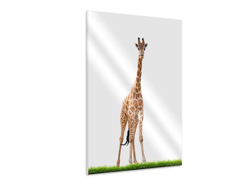 Hartschaumbild Die lange Giraffe