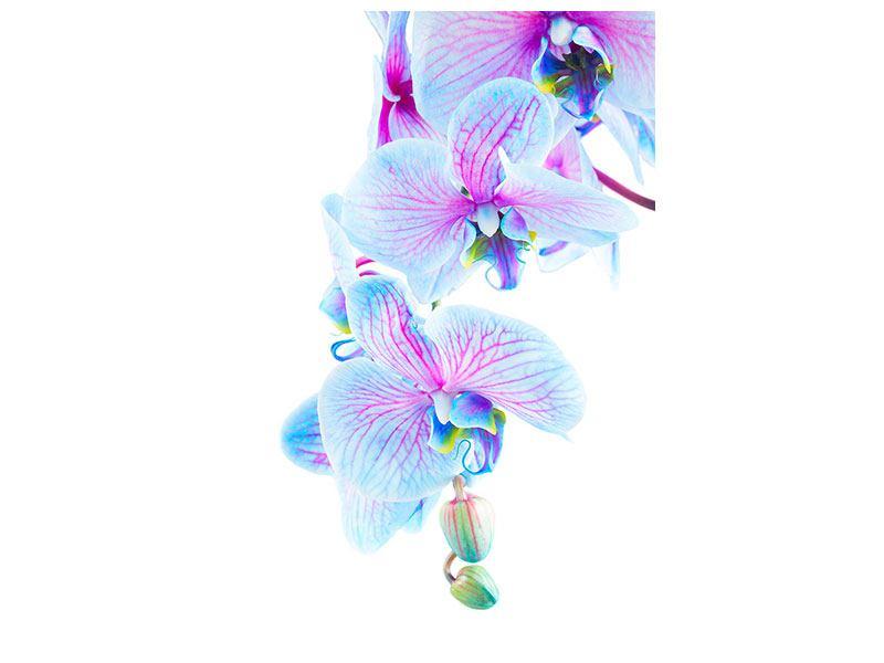 Hartschaumbild Orchideen-Schmetterling