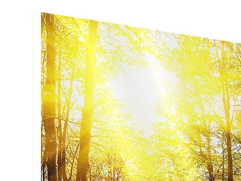Hartschaumbild Waldspaziergang in der Herbstsonne