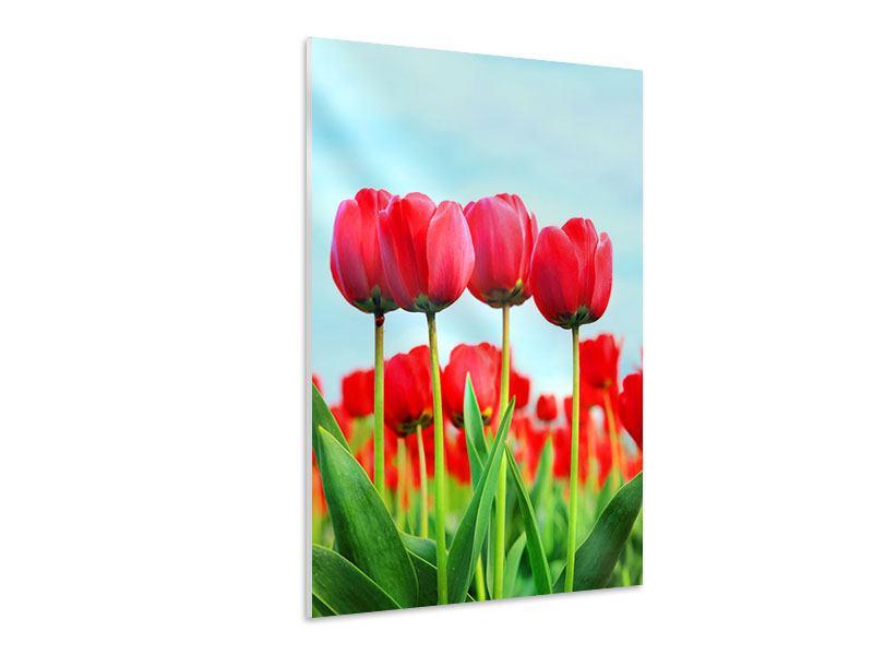 Hartschaumbild Rote Tulpen