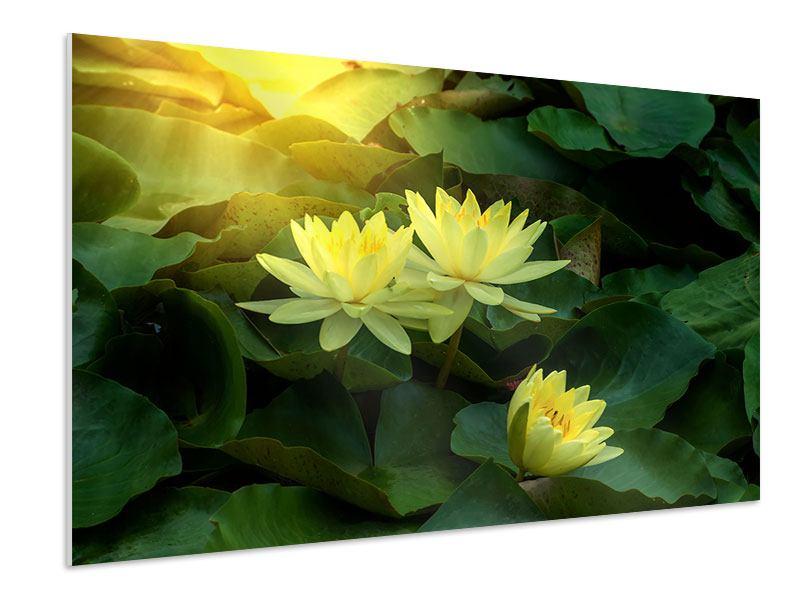 Hartschaumbild Wilde Lotus