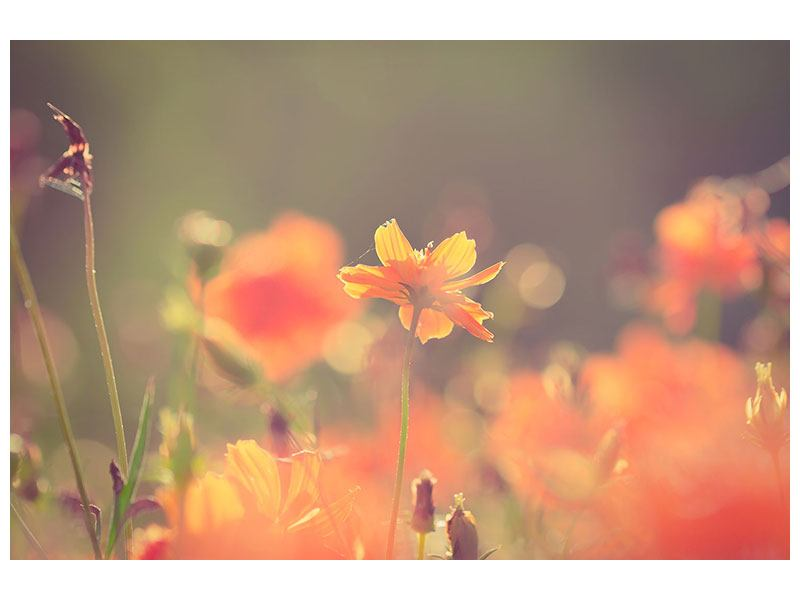 Hartschaumbild Blütenpracht