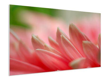 Hartschaumbild Close Up einer Blüte