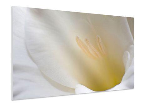 Hartschaumbild In einer Blüte