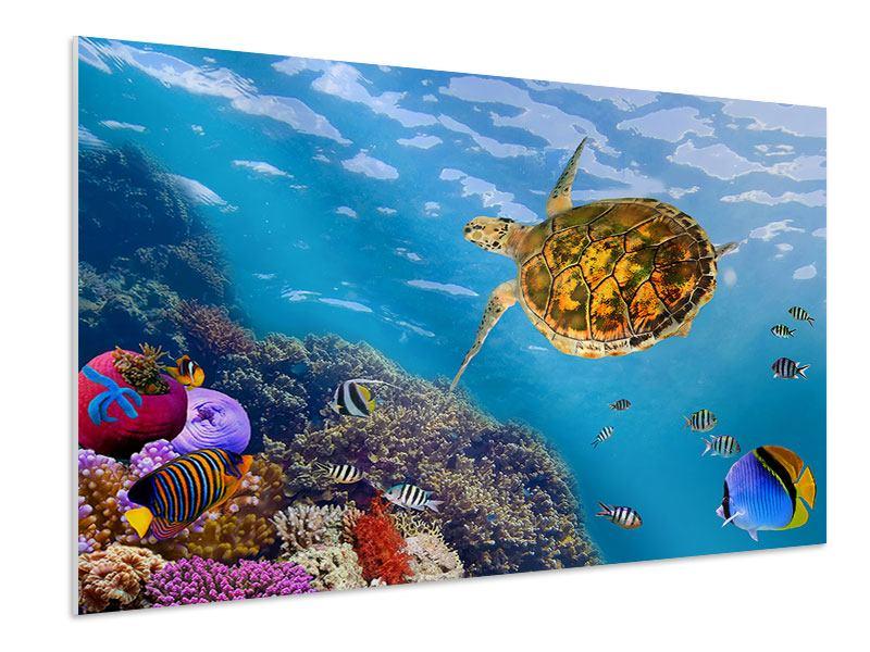 Hartschaumbild Die Wasserschildkröte