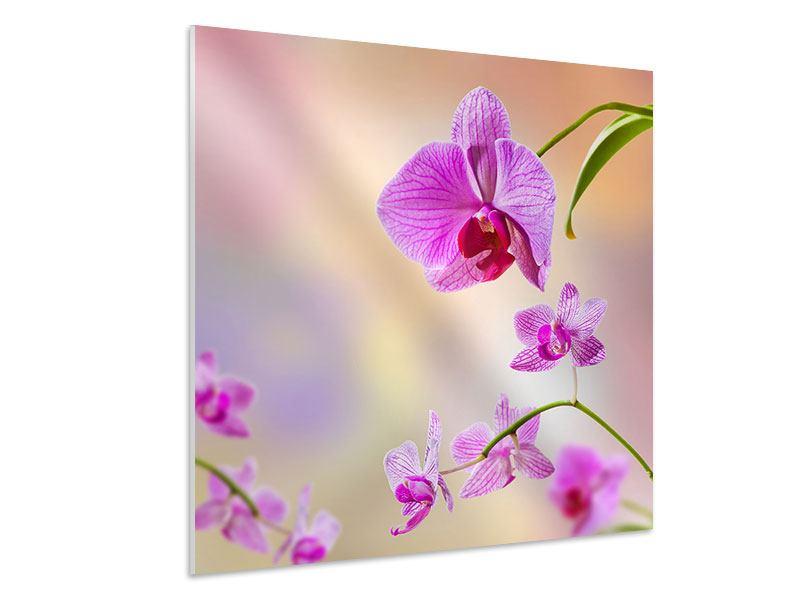 Hartschaumbild Romantische Orchideen
