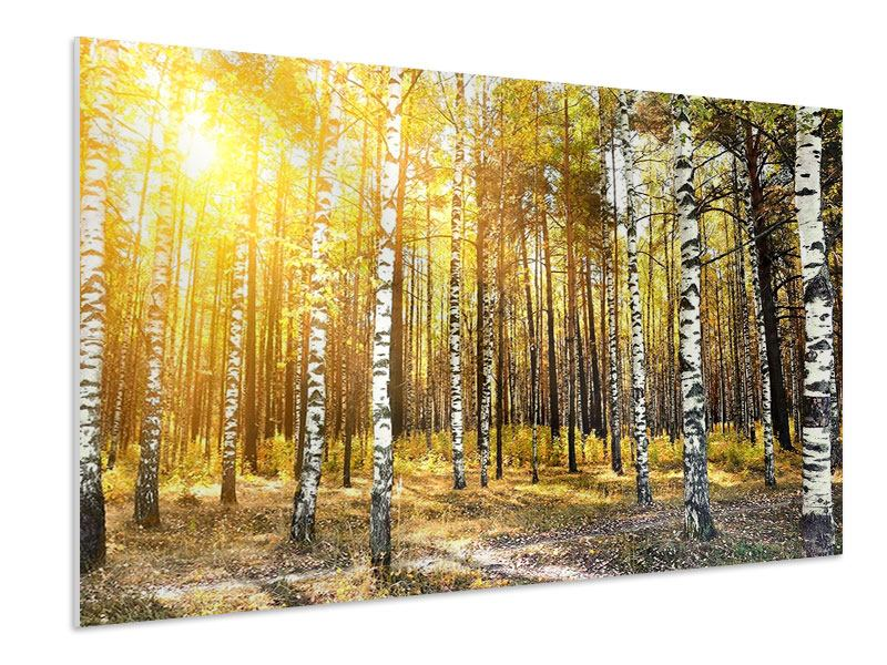 Hartschaumbild Birkenwald