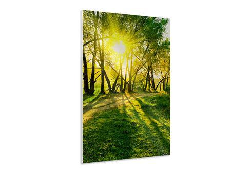 Hartschaumbild Waldweg im Sonnenlicht