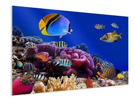Hartschaumbild Welt der Fische