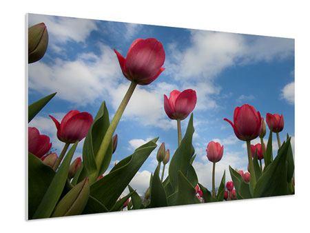 Hartschaumbild Tulpen im Himmel