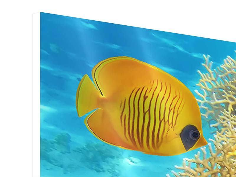 Hartschaumbild Fischreichtum