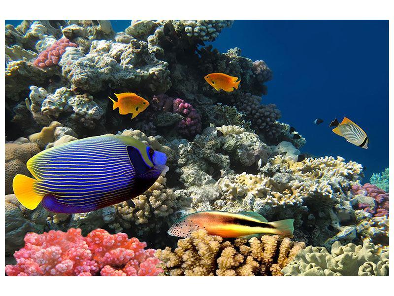 Hartschaumbild Das Aquarium
