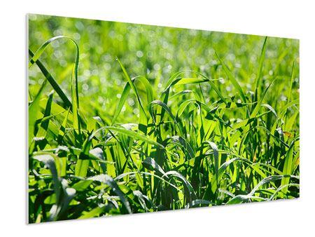 Hartschaumbild Sonniges Gras