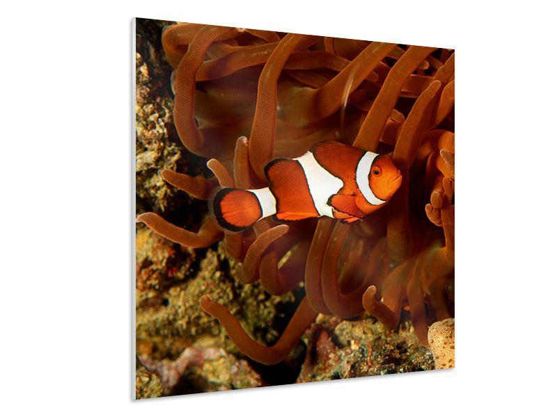Hartschaumbild Nemo