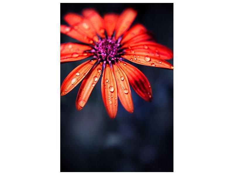 Hartschaumbild Colored Gänseblümchen
