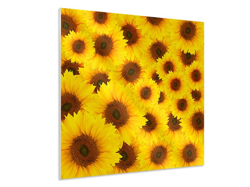 Hartschaumbild Ein Strauss Sonnenblumen