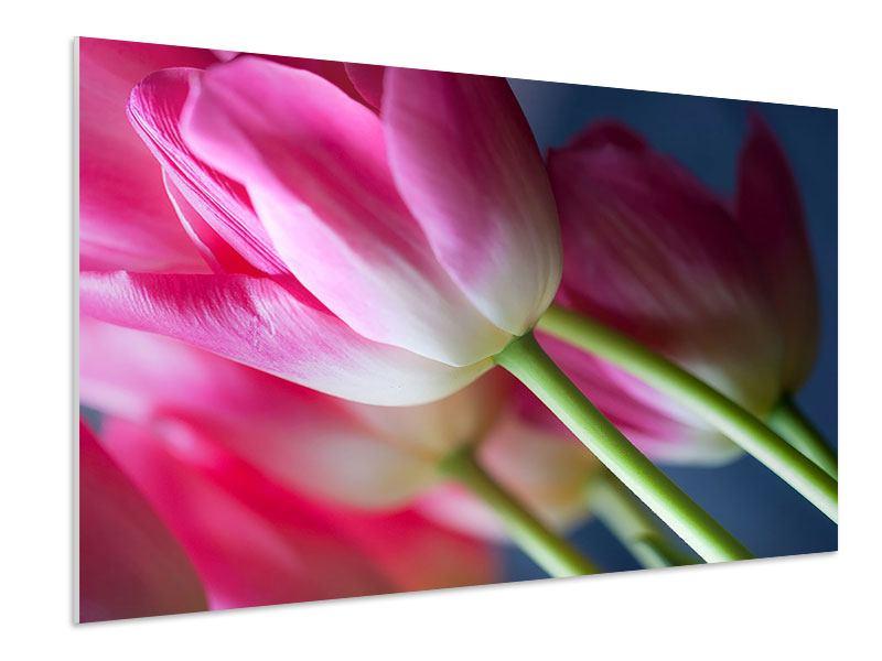 Hartschaumbild Makro Tulpen