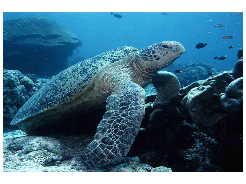 Hartschaumbild Die Meeresschildkröte