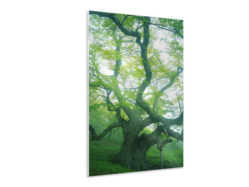 Hartschaumbild Der alte Baum
