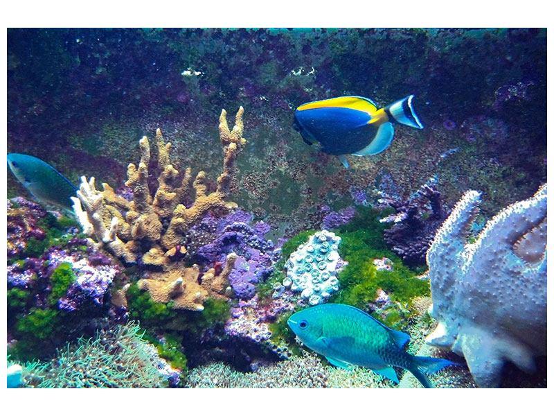 Hartschaumbild Fische