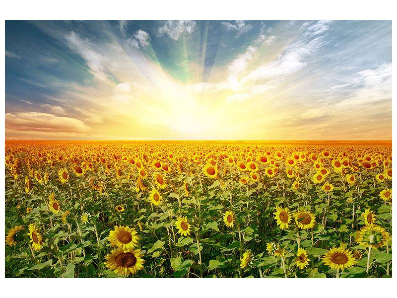Hartschaumbild Ein Feld voller Sonnenblumen