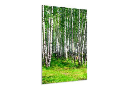 Hartschaumbild Der Birkenwald im Sommer