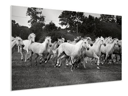 Hartschaumbild Die Mustang Herde