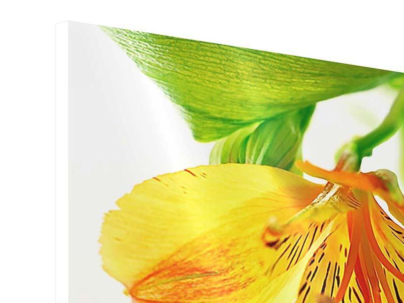 Hartschaumbild Fliessende Orchideenblüte