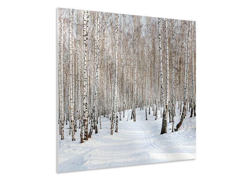 Hartschaumbild Birkenwald-Spuren im Schnee