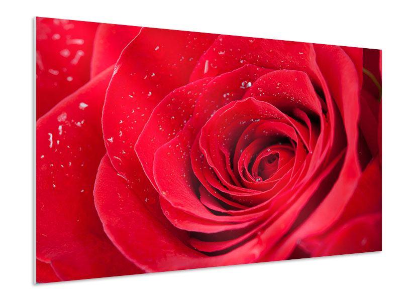 Hartschaumbild Rote Rose im Morgentau