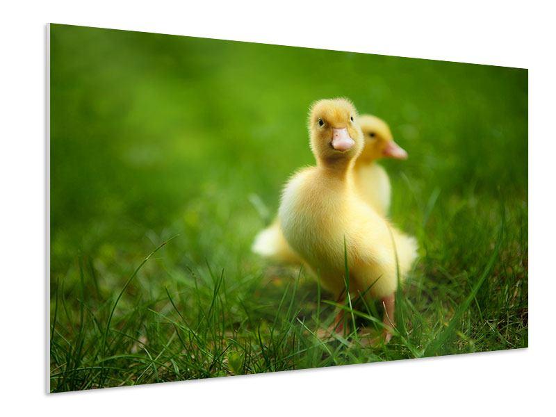 Hartschaumbild Entenküken