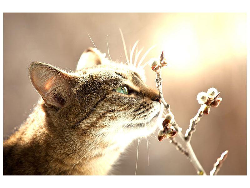 Hartschaumbild Die Katze