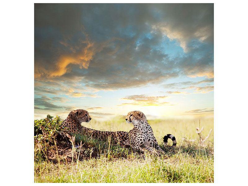 Hartschaumbild Geparden