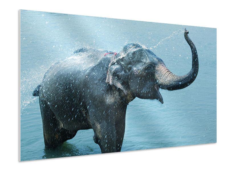 Hartschaumbild Der junge Elefant