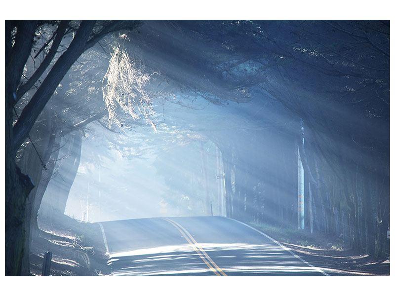 Hartschaumbild Lichtdurchflutete Baumallee