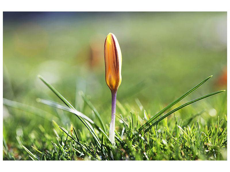 Hartschaumbild Die Blütenknospe