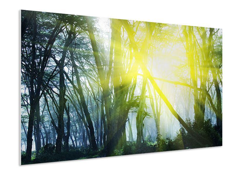 Hartschaumbild Sonnenstrahlen im Wald