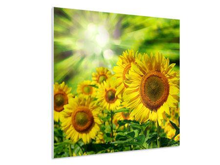 Hartschaumbild Die Sonne und die Blumen