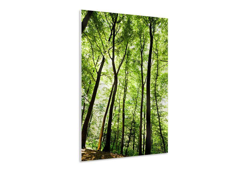 Hartschaumbild Wald