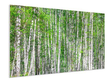 Hartschaumbild Der Birkenwald