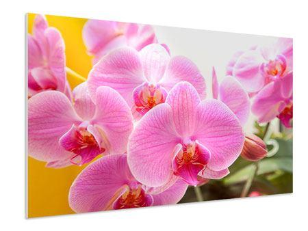 Hartschaumbild Königliche Orchideen